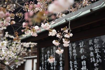 דיקור סיני - יפני: מהי הרפואה היפנית?