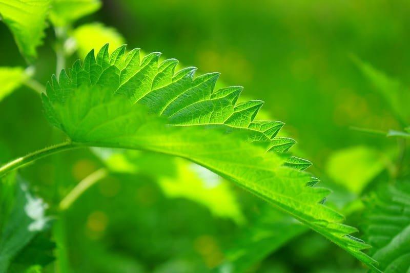 Yeşil Işık