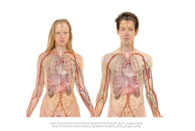 Wirbelsäulen-Basis-Therapie WBA