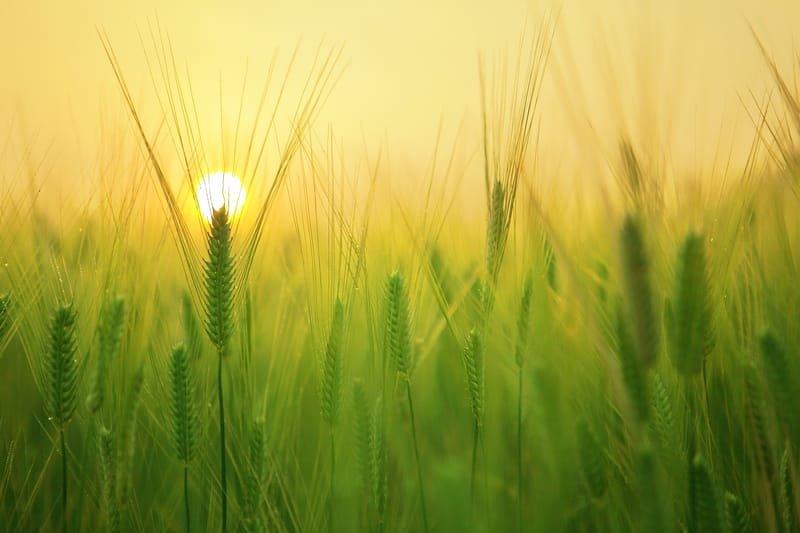 Bitkiler Işığa Nasıl Yanıt Verir?