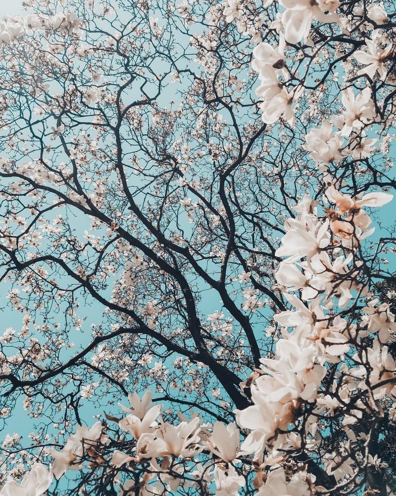 Spring Management