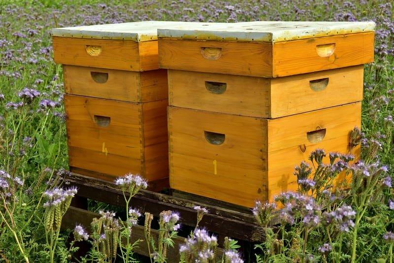 Extension du rucher Bio