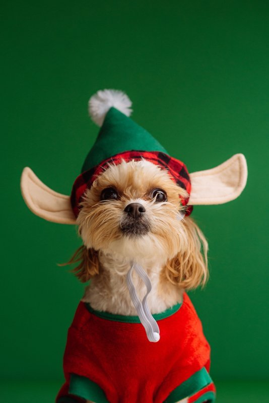 """Photos with """"Santa Paws"""" and Winter Wonderland Obstacle fun"""