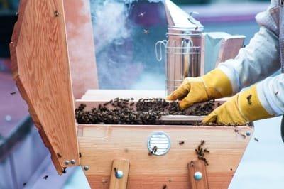 Alternative Hives