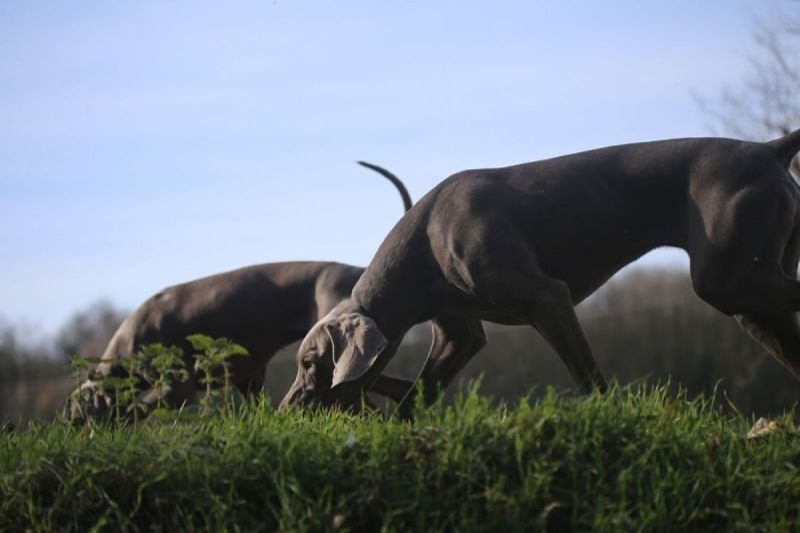 Dog Circuit Training Course