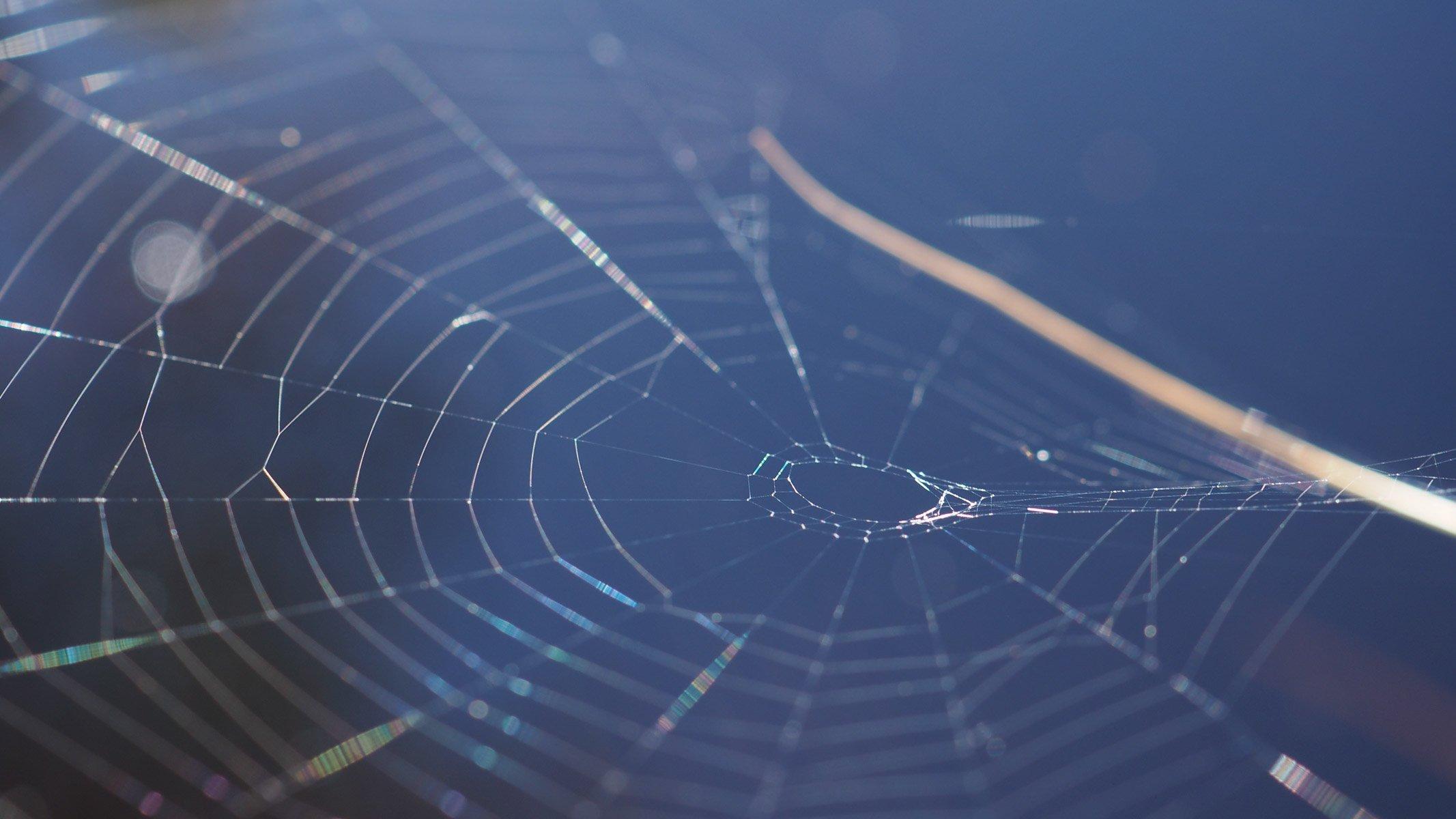 Hämähäkin seitti kiiltelee auringossa tumman veden yläpuolella.