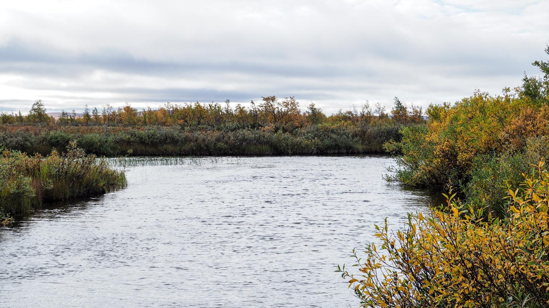 Kuvassa noin kymmenen metriä leveä Pöyrisjoki, jonka molemmat rannat kasvavat tiheää pajupensaikkoa.