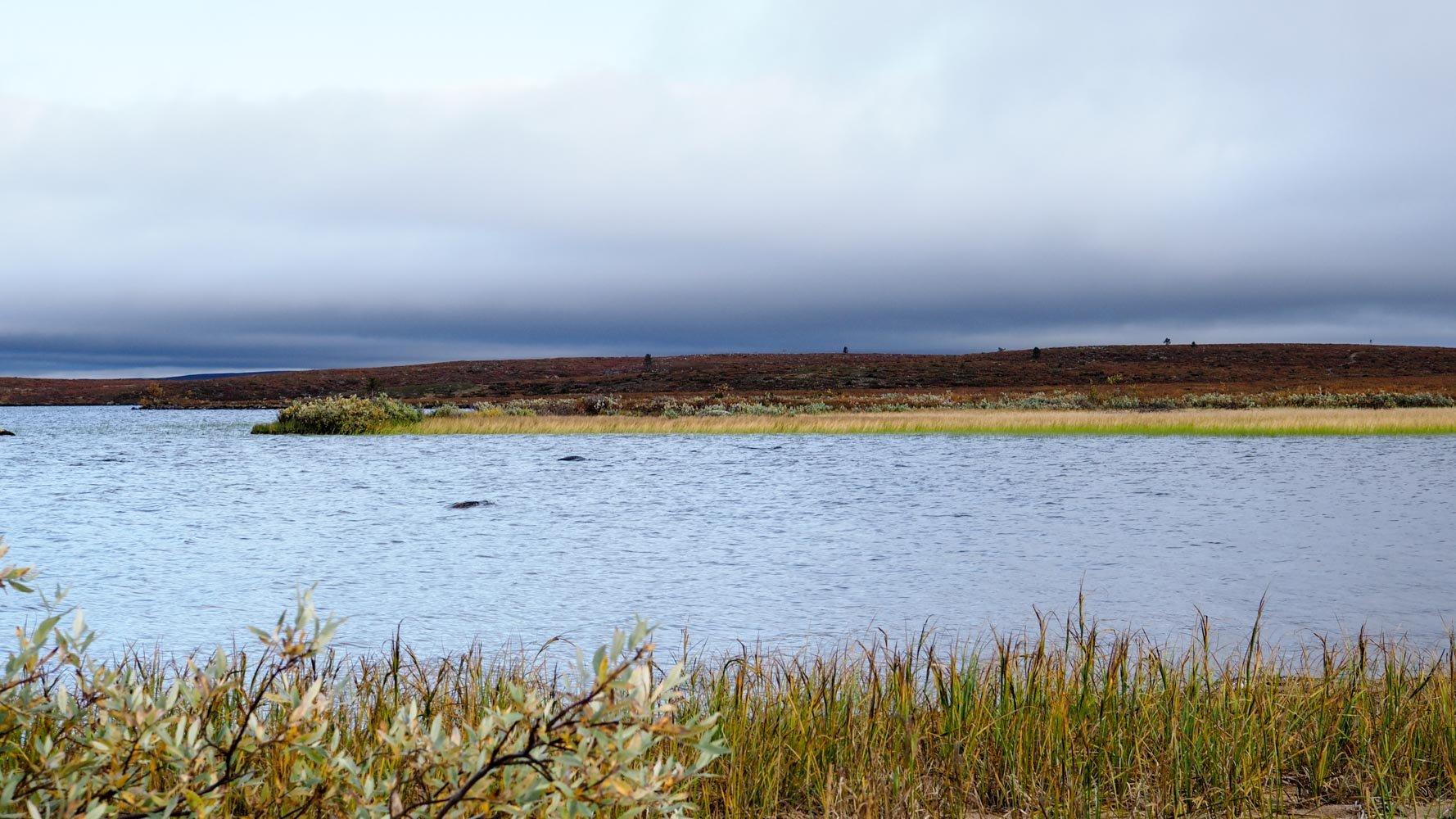 Pöyrisjärven noin 30 metriä leveä lahti, jonka toisella puolella kasvaa kaislikkoa ja yksinäinen pajupensas.