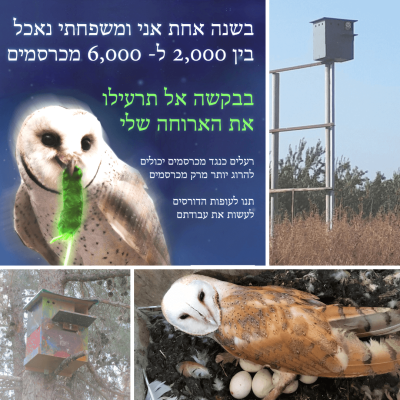 Project Bird Box Israel