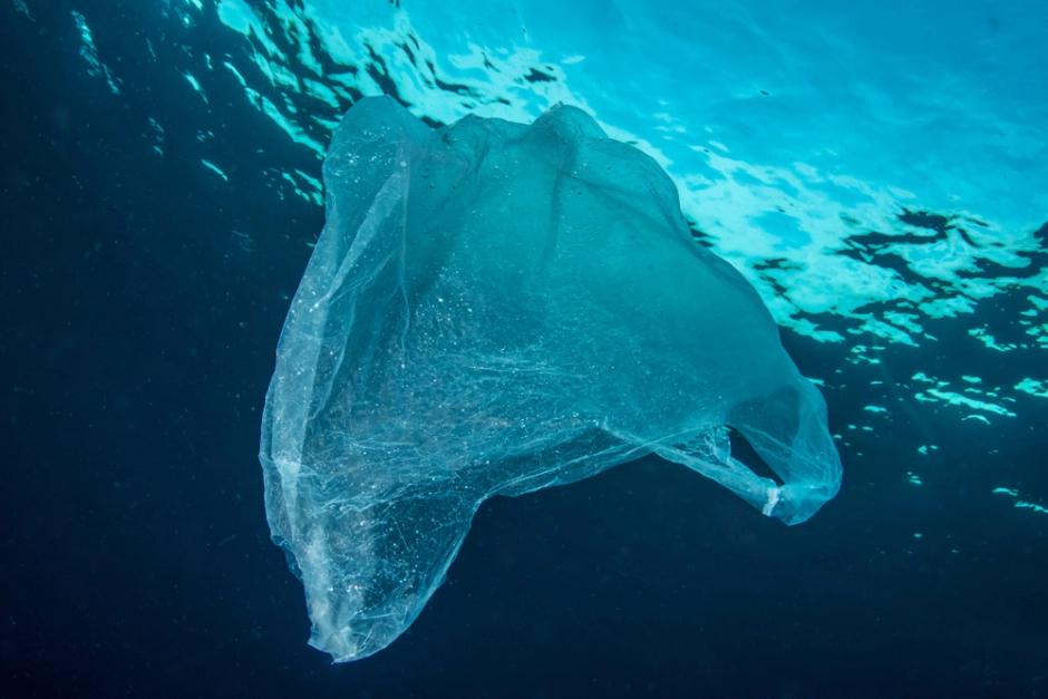 Marine science: plastic pollution mesopelagic fish