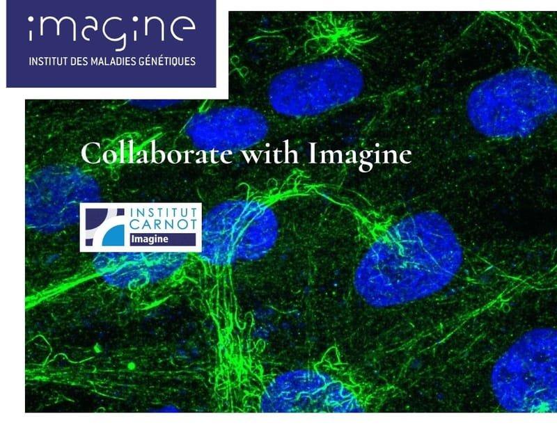 Institut IMAGINE