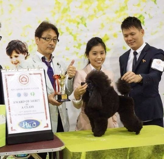 SKC GROOMING COMPETITION 2014