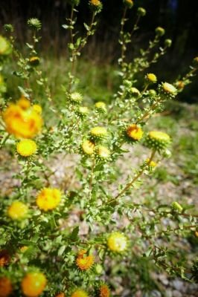 Fresh Herb Information