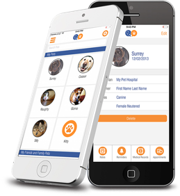 Download the Vitus Vet App by clicking the Learn More button!