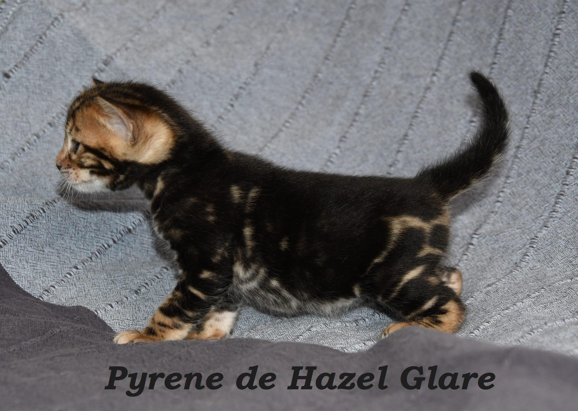 Pyrene de Hazel Glare