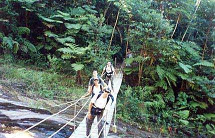 יער טיז'וקה
