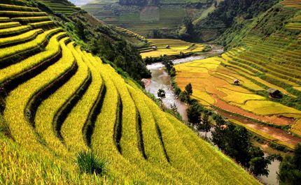 Rizières Chine