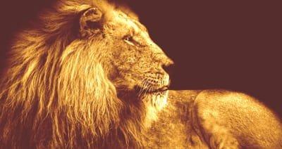 Lion Celtique