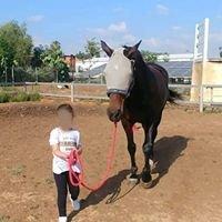 טיפול בעזרת סוסים