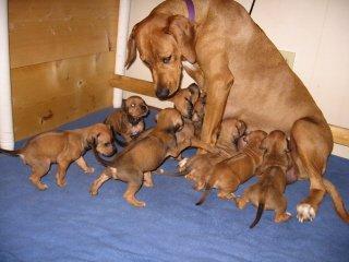 Puppies 2007