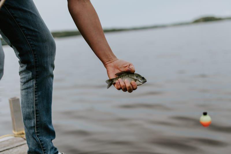 Sonar Fish Report