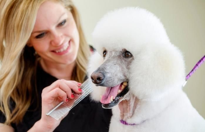 Groomer and grooming supplies