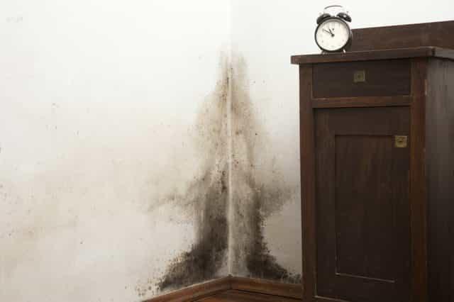 عينة من اشكال العفن و الرطوبة بالجدران