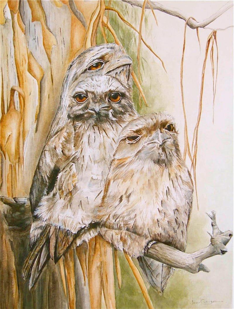 Wildlife Paintings & Illustrations