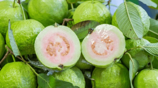 15 Amazing Guava Benefits: Heart Healthy, Weight Loss Friendly and More