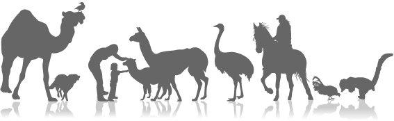 בעלי חיים במרכז חוויות - טיפול בעזרת בעלי חיים וסוסים
