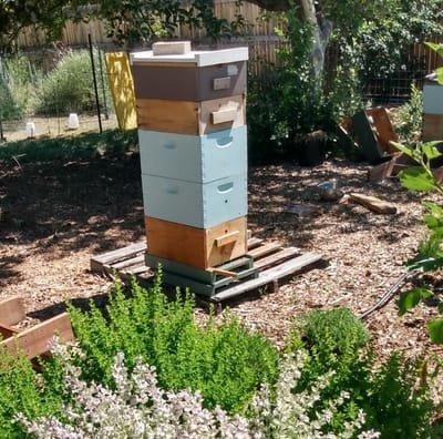 Bee-ginners