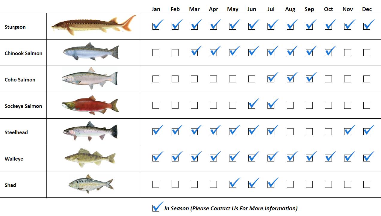 Columbia River Fishing Guide Species Fishing Calendar