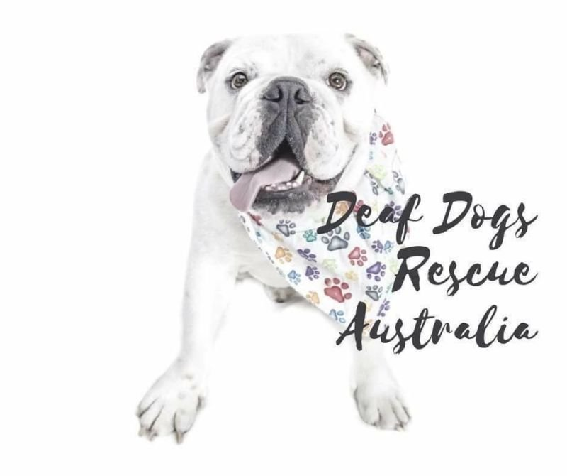 Rescue - Deaf Dogs Rescue Australia HQ