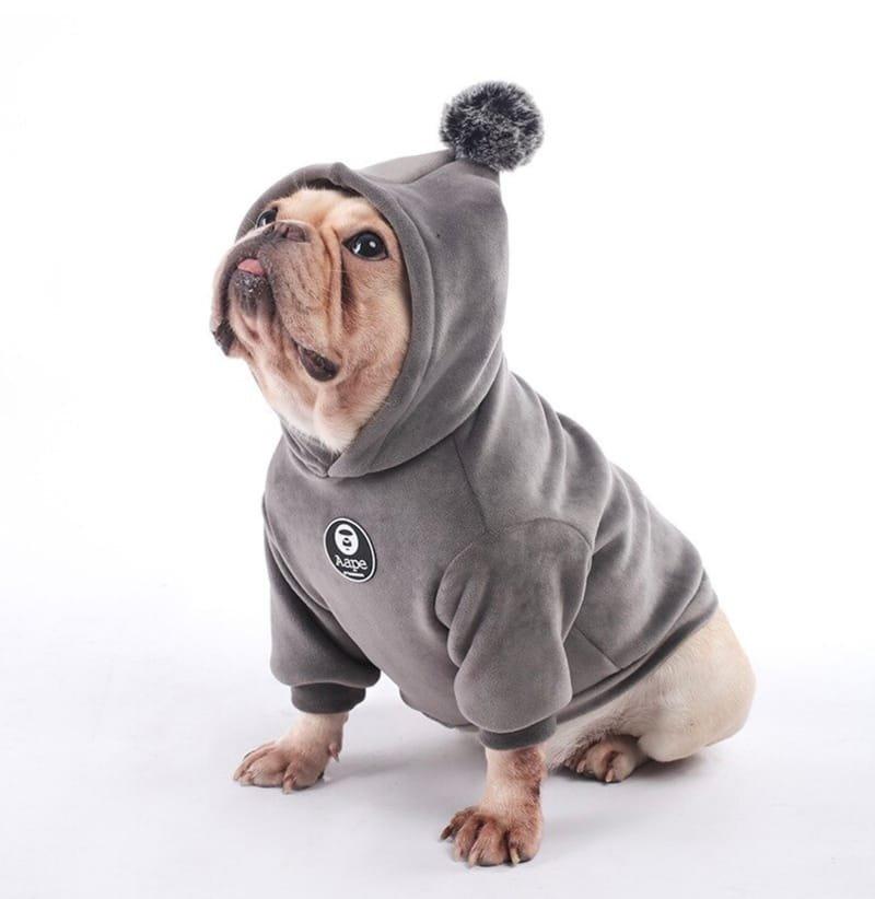 Fashion and Dog Apparel