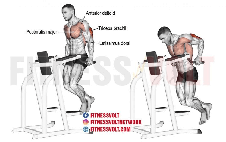 Tricep Dip (Triceps) | Exercise Guides and Videos