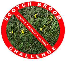Scotch_Broom_Picture_from_Brochure_14.png