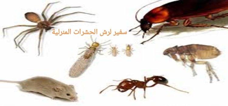 دليل شركات مكافحة الحشرات بالمنطقة الشرقية