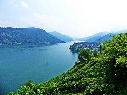 Vignes du Tessin Lac du Lugano