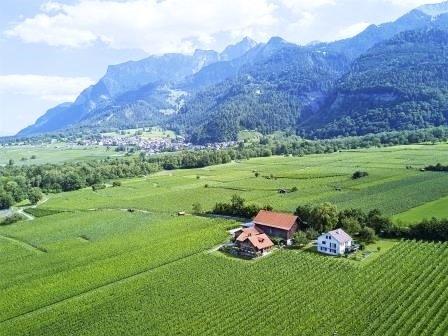 Les vigne de la Familien Liesch