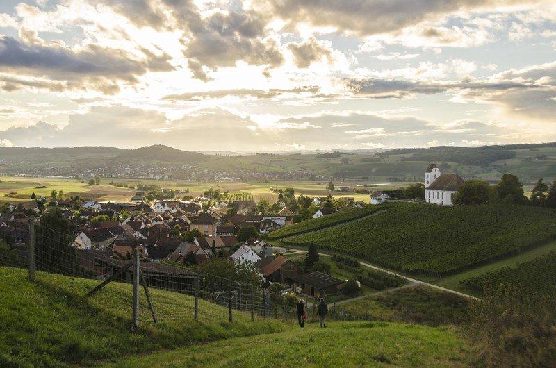 Les vignes de Rötiberg Kellerei situées à Wichlingen dans le vignoble de Schaffhouse.