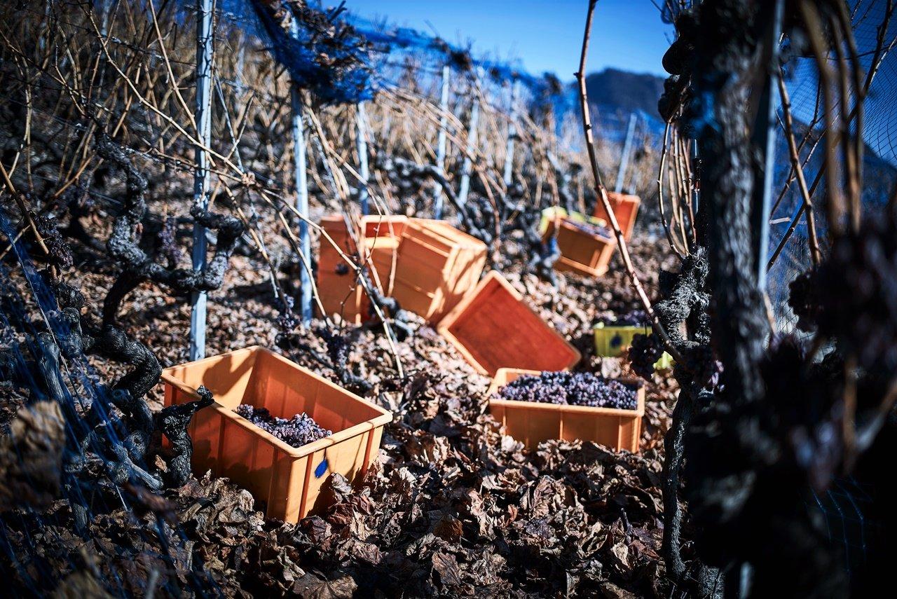 Les vignes de Thierry Constantin entre Vétroz et Sion dans le vignoble valaisan