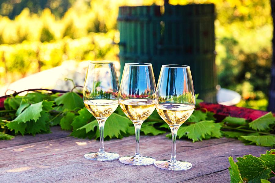 Trois verres de vin blanc sec issu de cépage sauvignon