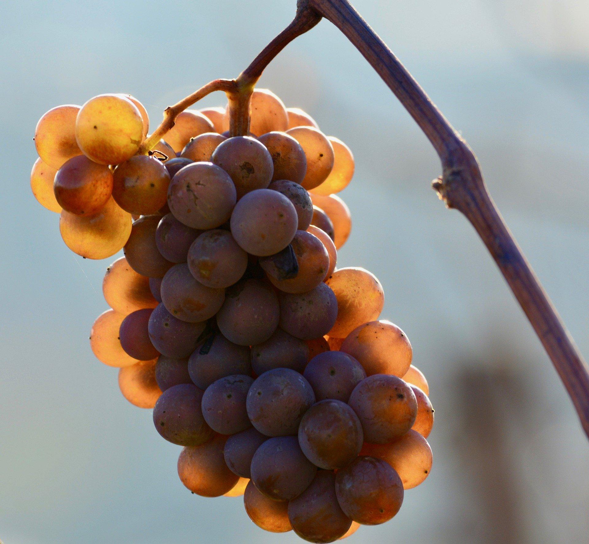 grape de raisin blanc vin doux
