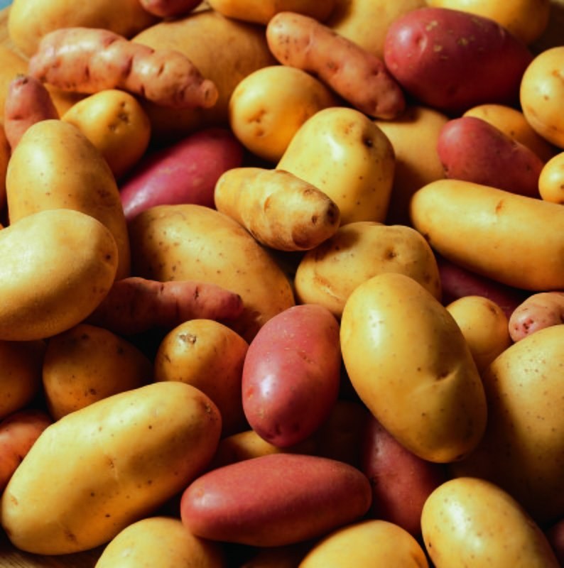 Les pommes de terre