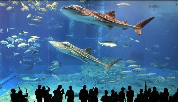 اكواريوم اسطنبول - المتحف المائي في اسطنبول