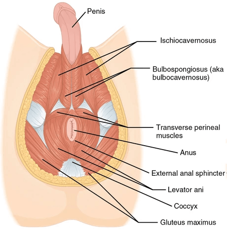 prostate location for massage