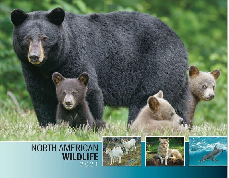 Wildlife 2021