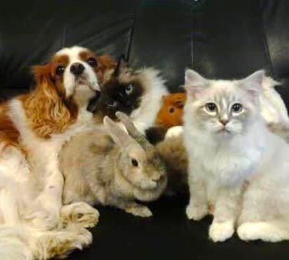 Petsitting en visites à domicile
