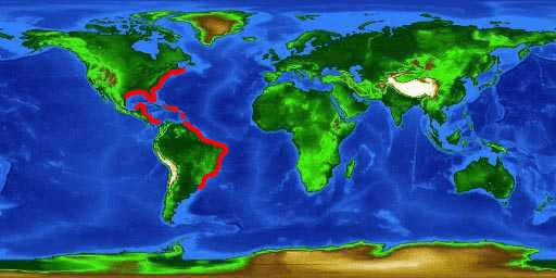 World distribution map for the lined seahorse