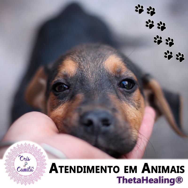 Atendimento em Animais